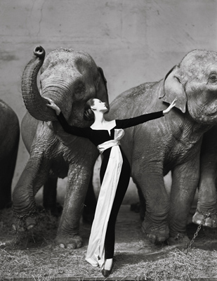 "Photograph by Richard Avedon © The Richard Avedon Foundation. ""Dovima with elephants, evening dress by Dior, Cirque d'Hiver, Paris, August 1955"""