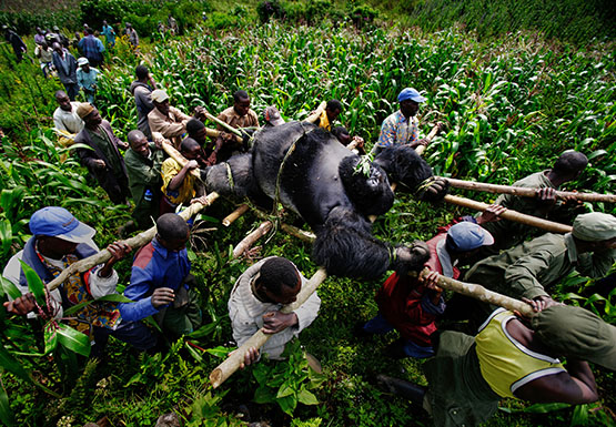 "Brent Stirton was shortlisted for ""A Violation of Eden,"" his work on the toll of human conflict on wildlife."