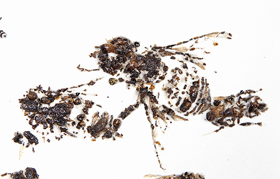 "Matthew Brandt, was nominated for ""Honeybees,"" his series of photographs created by photographing arrangements of dead bees. © Prix Pictet Ltd 2015"