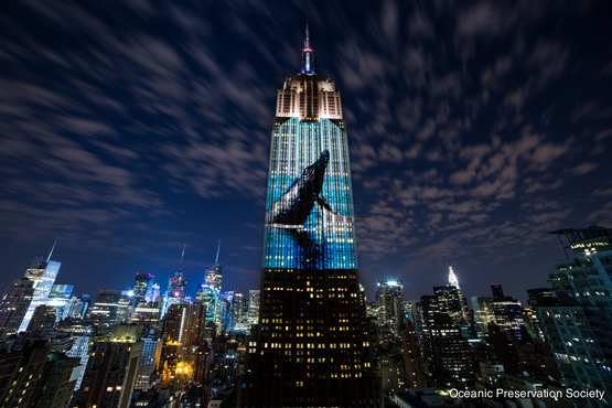 One of the images of endangered species, curated by Louis Psihoyos, projected onto the Empire State Building. Courtesy Racing Extinction.