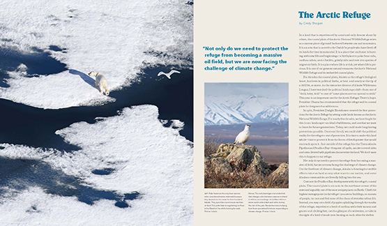 Schulz's images of a polar bear and rock ptarmigan on the opening spread of the catalogue.